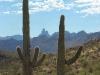 saguaro-w-weavers